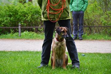 Gruppenunterricht für Erwachsene Hunde