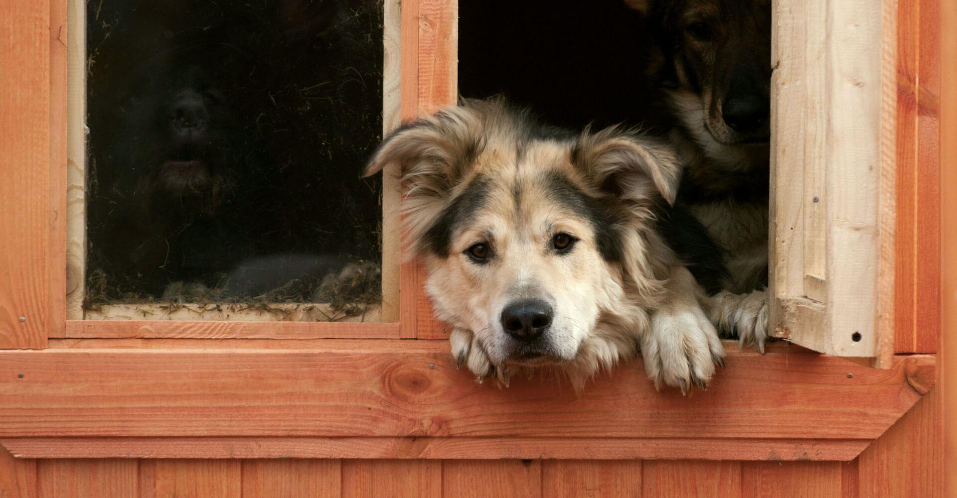 Tierheimhunde